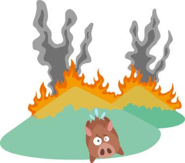 山火事の主な原因
